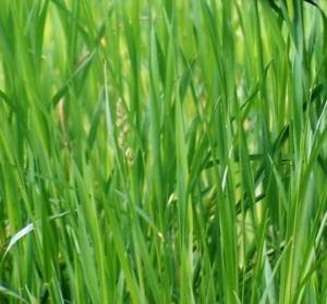 Greenwashing in der CSR